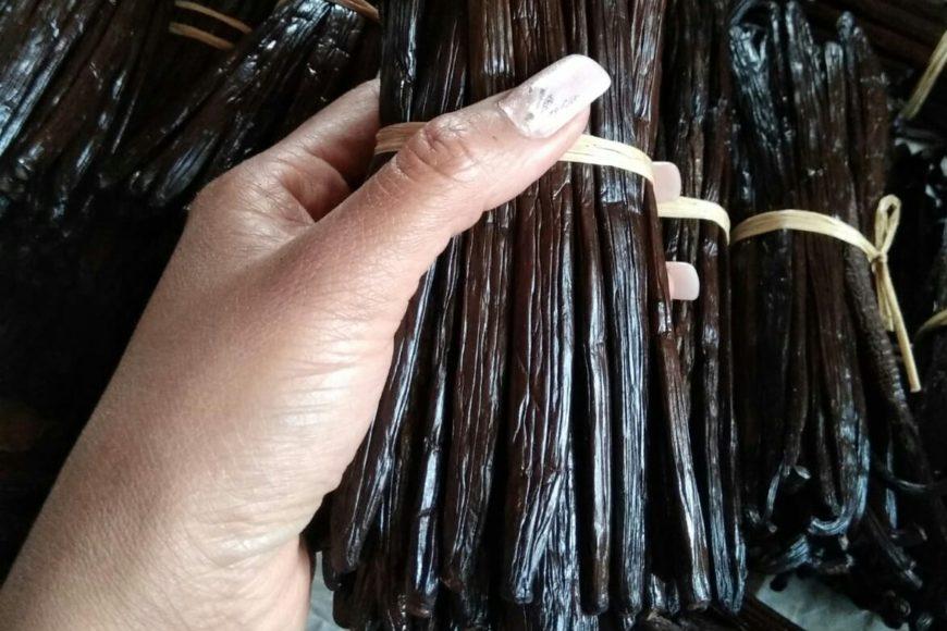 Presto in arrivo la Vaniglia direttamente dal Madagascar