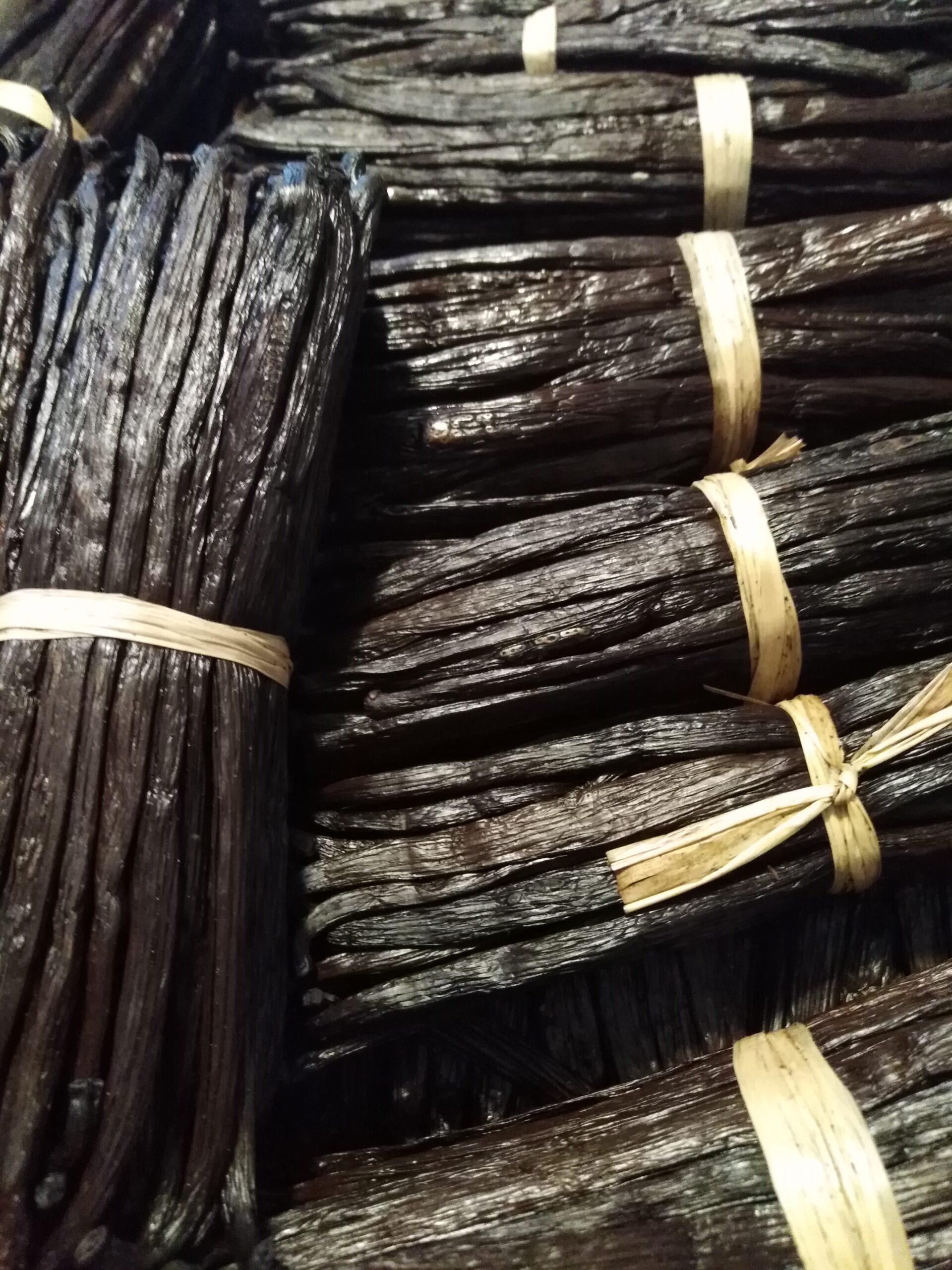 Vaniglia (Bourbon quality) qualità TK Noir - Bacche
